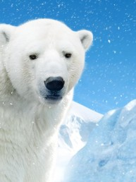 McAuliffe Trucking - Polar Bear